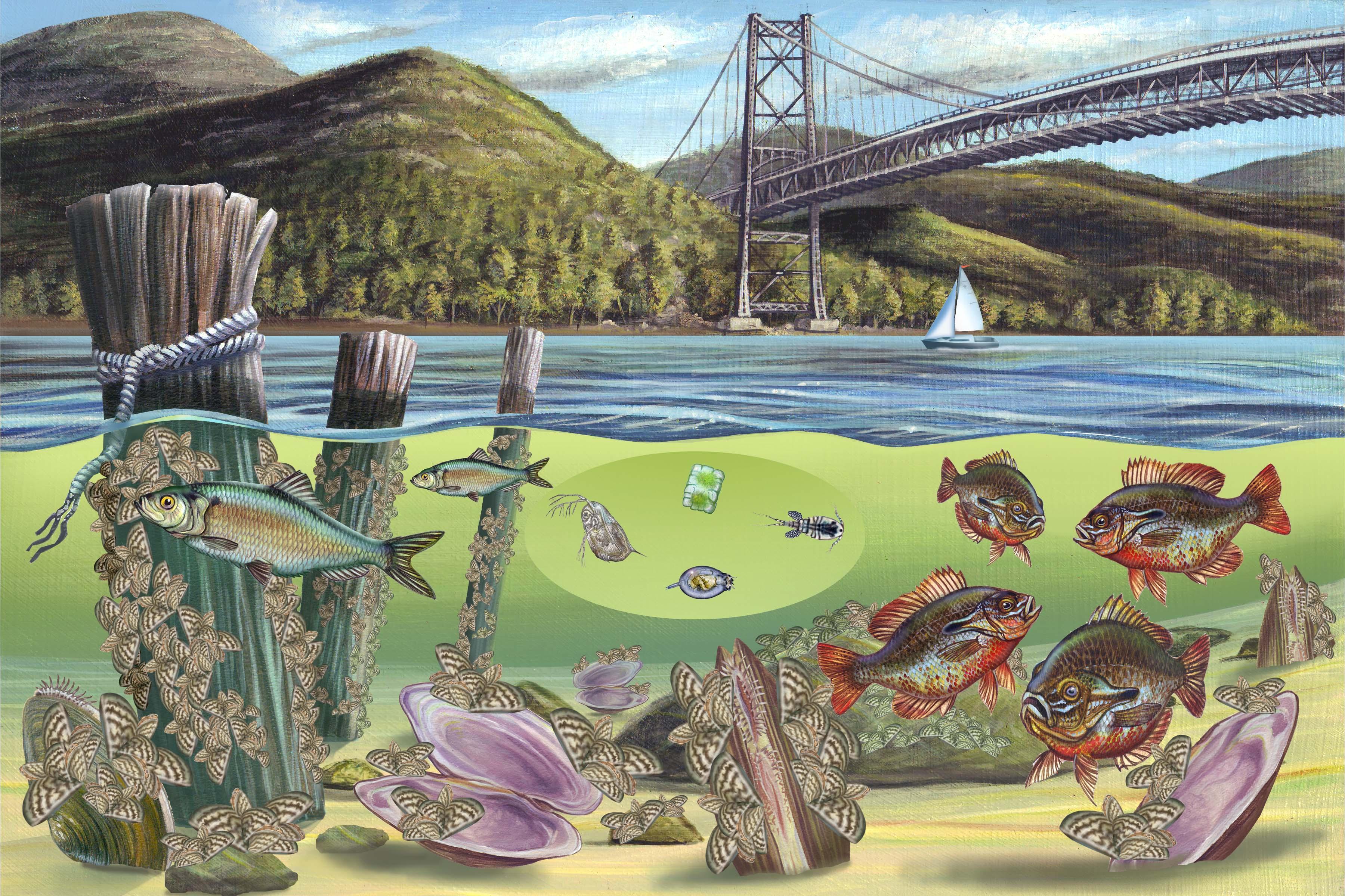 экосистема это картинки рисунки цветной