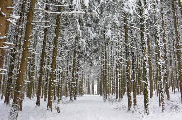 Forest in winter CC by andersweit