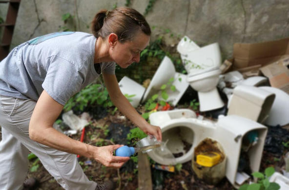 Shannon LaDeau sampling toilets for mosquito larva