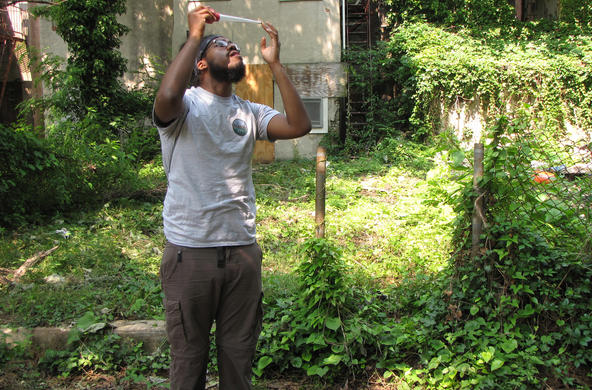 Baltimore sampling for mosquitoes CC BES