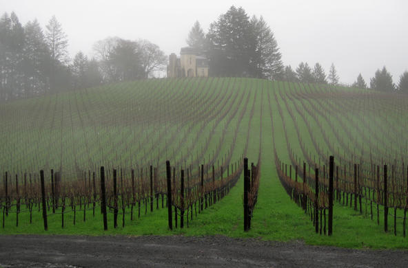 terra vineyards fog