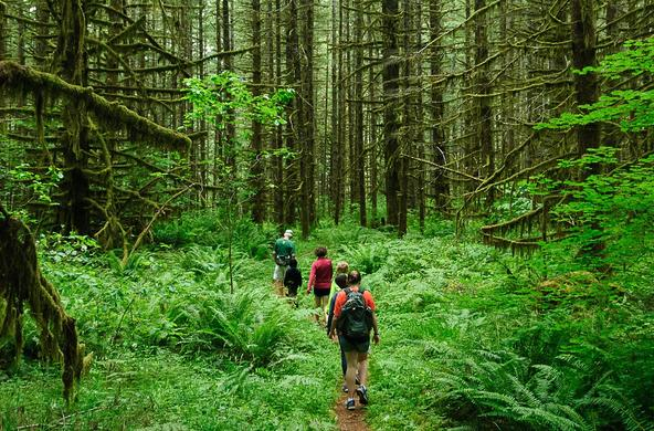 hiking in forest cc loren kerns