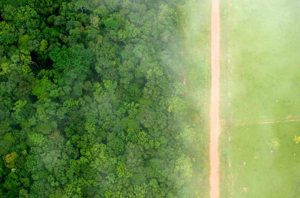 deforestation in Brazil cc CIFOR